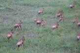 18-20 serengeti (307)-1