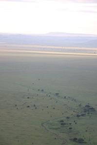 18-20 serengeti (309)