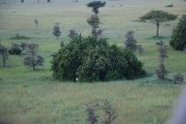 18-20 serengeti (325)