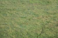18-20 serengeti (334)