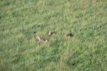 18-20 serengeti (344)