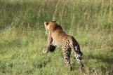 18-20 serengeti (371)