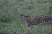 18-20 serengeti (43)