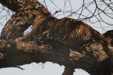 18-20 serengeti (520)