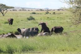 18-20 serengeti (782)