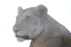 18-20 serengeti (86)