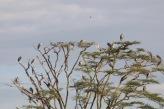 18-20 serengeti (935)-2