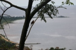 29 Mwanza to Bukoba (62)