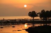 Tanga Sunrise