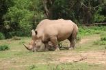 10 Entebbe Zoo (138)