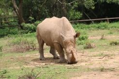 10 Entebbe Zoo (140)