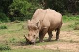 10 Entebbe Zoo (142)