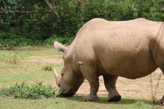 10 Entebbe Zoo (144)