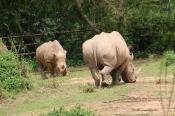 10 Entebbe Zoo (152)