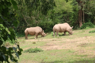 10 Entebbe Zoo (155)