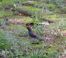 Compound Birds