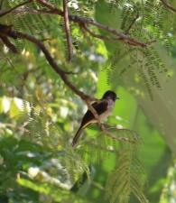 Bird (21)