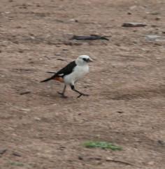 Day 2 Serengeti (30)