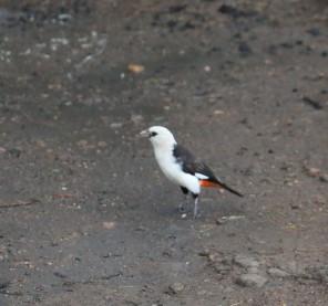 Day 2 Serengeti (41)