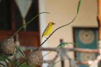 Zanzibar (571)-503