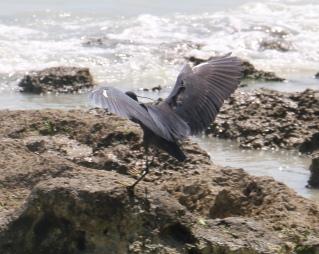Zanzibar (724)-656
