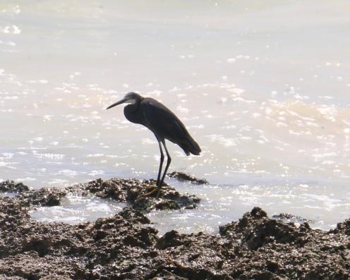 Zanzibar (725)-657