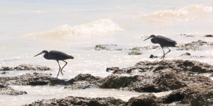 Zanzibar (726)-658