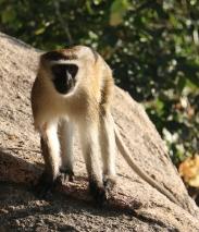 Day 11 - Monkey Bay - Morning Monkey